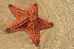 Estrela do mar em uma praia Imagens de Stock