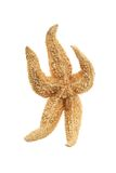 Estrela do mar engraçada imagem de stock