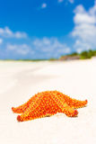 Estrela do mar (estrela de mar) em uma praia tropical em Cuba Foto de Stock
