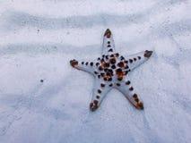 Estrela do mar, ilha sibuan, sabah, malaysia foto de stock royalty free