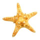 Estrela do mar isolada no branco fotografia de stock royalty free