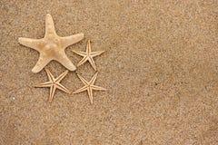 Estrela do mar na areia Foto de Stock