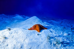 Estrela do mar na areia fotografia de stock