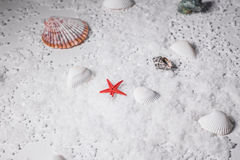 Estrela do mar na parte inferior Foto de Stock Royalty Free