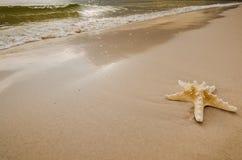 Estrela do mar na praia Fotografia de Stock