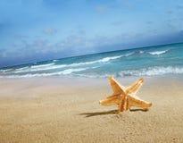 Estrela do mar na praia fotos de stock royalty free
