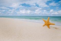 Estrela do mar na praia dourada da areia com as ondas na luz suave Foto de Stock