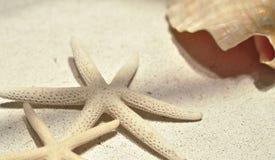 Estrela do mar no pano Fotografia de Stock