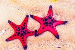 Estrela do mar no mar pela ilha de Phu Quoc em Vietname fotos de stock