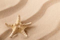 Estrela do mar ou estrela de mar no litoral imagem de stock