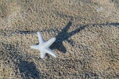 Estrela do mar plástica Imagem de Stock Royalty Free
