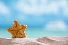 Estrela do mar rara da água profunda com oceano, praia e seascape Imagem de Stock