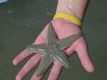 Estrela do Mar (sea star) Royalty Free Stock Images