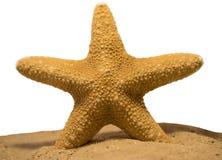 Estrela do mar/Seestern Imagens de Stock Royalty Free