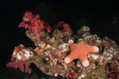 Estrela do mar sob a água na parte inferior do mar de Andaman, Tailândia Imagem de Stock Royalty Free