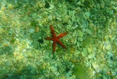 Estrela do mar vermelha no fundo do mar Montenegro, o mar de adriático clear filme