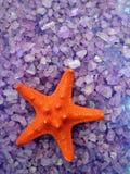 Estrela do mar vermelha no sal de banho Imagens de Stock Royalty Free