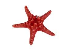 Estrela do Mar Vermelho Imagens de Stock