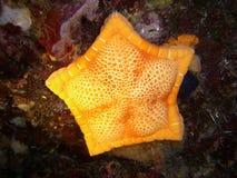 Estrela marinha amarela Fotos de Stock Royalty Free
