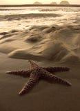 Estrela na costa Imagens de Stock