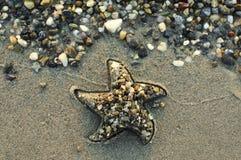 Estrela na praia Imagens de Stock