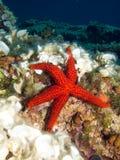 Estrela vermelha Fotografia de Stock Royalty Free
