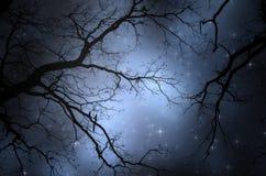 Estrelas acima da árvore na noite Imagens de Stock Royalty Free