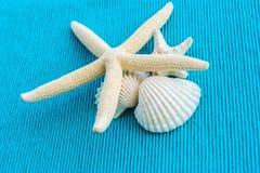 Estrelas de mar e shell do mar no fundo azul Imagens de Stock