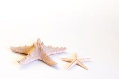 Estrelas de mar isoladas no fundo branco Fotografia de Stock Royalty Free