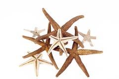 Estrelas de mar isoladas no fundo branco Fotografia de Stock
