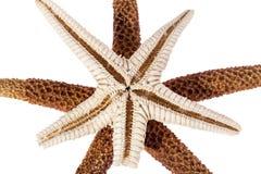 Estrelas de mar isoladas no fundo branco, fim acima Imagem de Stock
