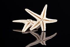 Estrelas de mar isoladas no fundo preto, reflexão Imagem de Stock Royalty Free