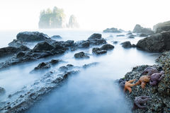 Estrelas de mar na maré baixa na cena chave alta do oceano Imagem de Stock Royalty Free