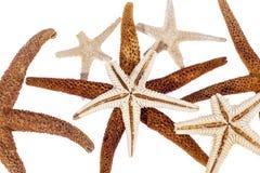 Estrelas de mar secadas isoladas no fundo branco Fotografia de Stock
