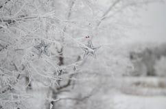 Estrelas de prata na árvore na neve Imagem de Stock Royalty Free