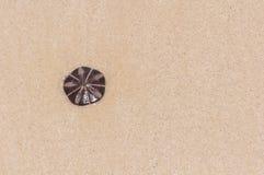 Estrelas do escudo coloc na areia Fotografia de Stock Royalty Free