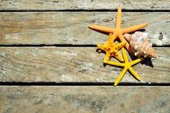 Estrelas do mar e búzio em um cais de madeira Fotografia de Stock Royalty Free