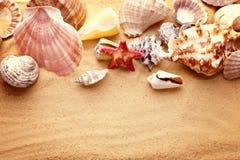 Estrelas do mar e conchas do mar na areia Imagem de Stock Royalty Free