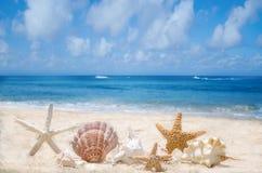 Estrelas do mar e conchas do mar na praia Fotografia de Stock Royalty Free