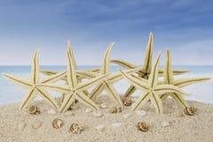 Estrelas do mar e conchas do mar na praia Fotografia de Stock