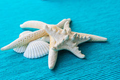 Estrelas do mar e shell do mar no fundo azul Fotografia de Stock