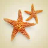 Estrelas do mar em um fundo bege, com um efeito retro Fotografia de Stock
