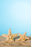 Estrelas do mar na areia Fotografia de Stock