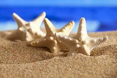 Estrelas do mar na areia e no mar no fundo Imagens de Stock Royalty Free