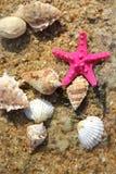 Estrelas do mar na praia Fotografia de Stock Royalty Free