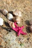 Estrelas do mar na praia Foto de Stock Royalty Free