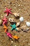Estrelas do mar na praia Foto de Stock