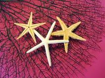 Estrelas do mar no coral Fotografia de Stock Royalty Free