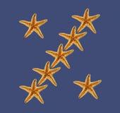 Estrelas do mar no fundo azul Imagem de Stock