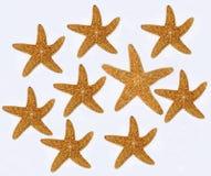 Estrelas do mar no fundo branco Imagens de Stock Royalty Free